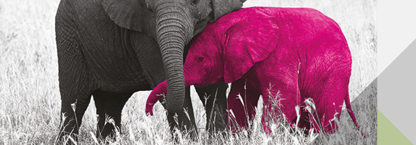Managing Across The Lifecycle Spo Pink Elephant